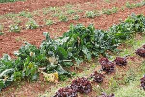 lhorta de Xavier, verdura ecologica