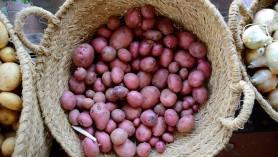 Patates vermelles